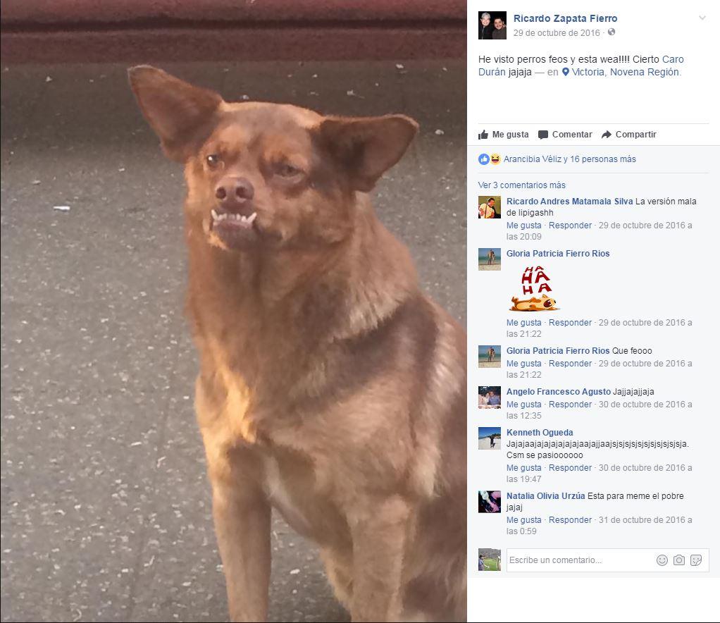 Conoce a chilaquil, el perro que se apoderó de las redes sociales