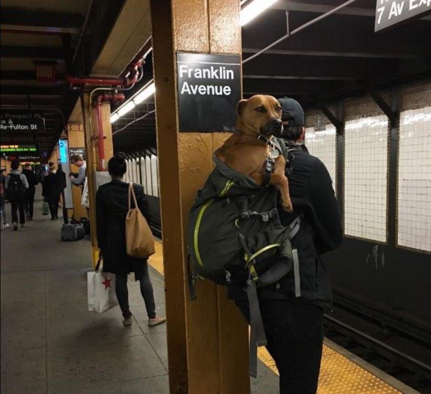 Convierten vagón del metro en biblioteca — En Nueva York