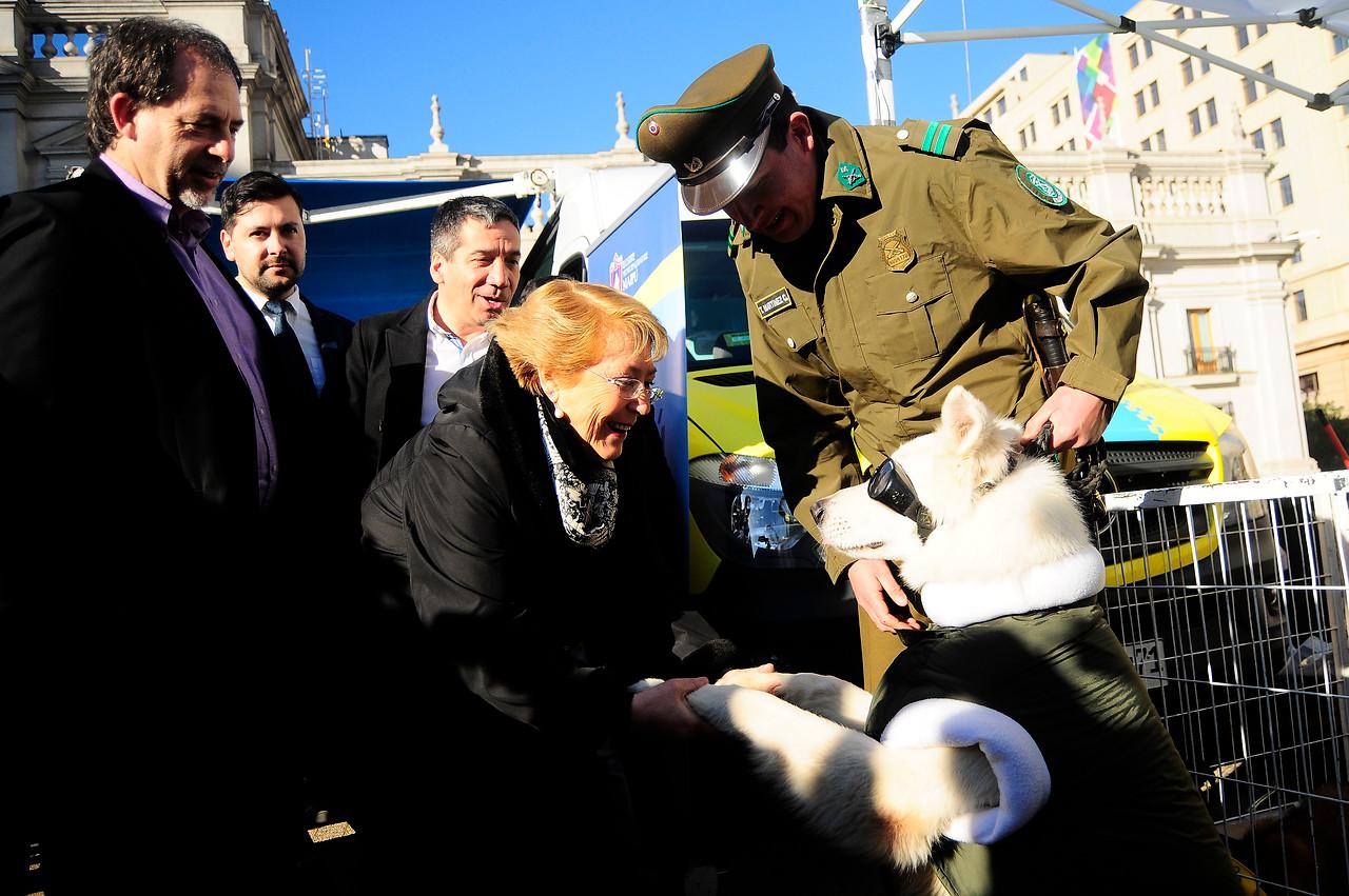 Las exigencias que tendrán que cumplir los dueños de mascotas — Ley Cholito