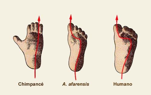 204919 1 59a9a7aa0f766 Científicos completamente desconcertados Encuentran huellas humanas de 5,7 millones de años en Creta