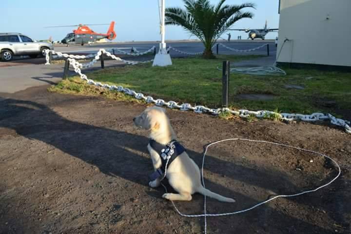 Perrita lanzada desde un auto ahora es cabo primero de Aviación Naval
