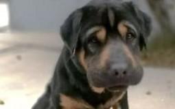 Mujer es multada por abandonar un perro que había adoptado recientemente
