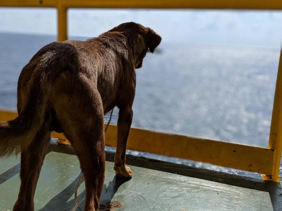 El perro mirando al mar tras ser sacado de ahí.