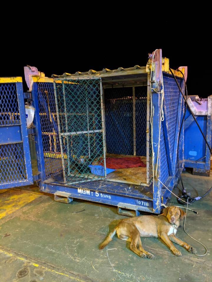 El perro descansando junto a su jaula