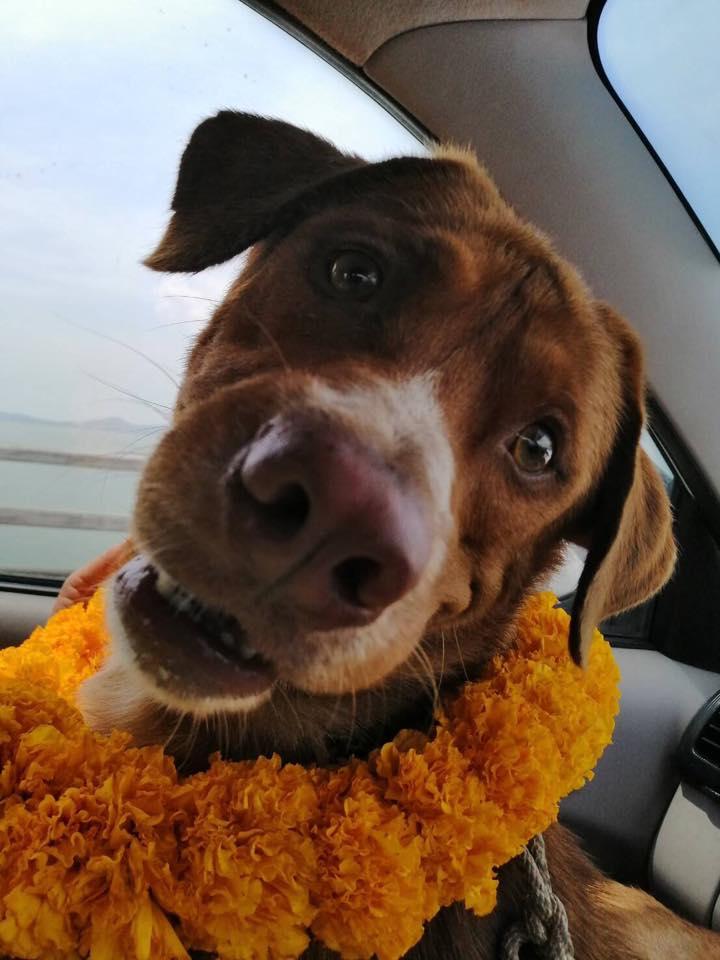El perro feliz tras ser rescatado